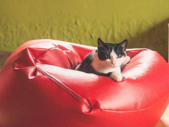 Kies jij ook voor comfort? Ga voor de juiste zitzak!