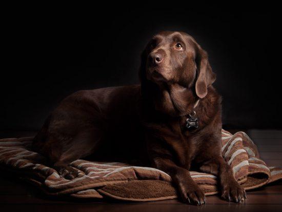 De perfecte rustplek voor honden.