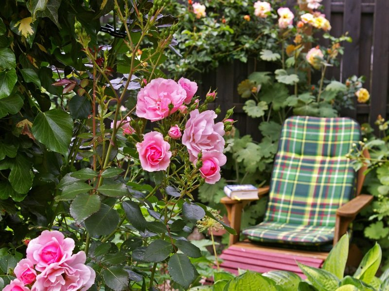 Stoel en planten in de tuin