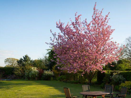 3 tips voor het aanleggen van een nieuwe tuin