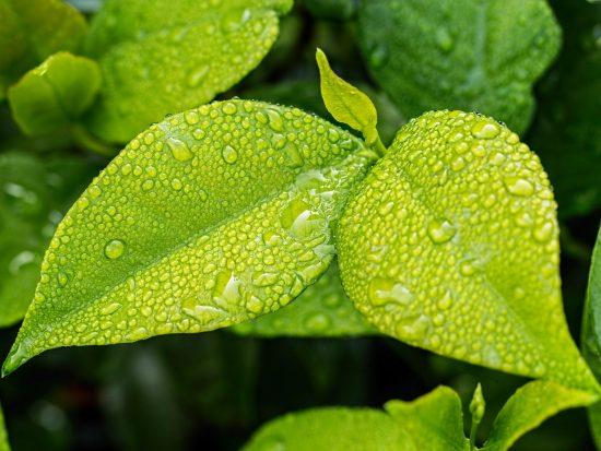 3 voordelen van kunstplanten in je interieur