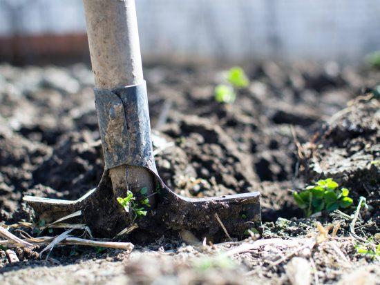 Veel gemaakte fouten bij tuinontwerp en tuinaanleg