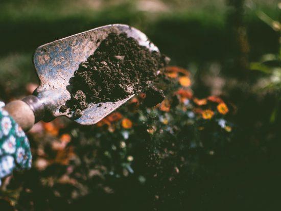 Wanneer is het geschikte moment voor tuinonderhoud?