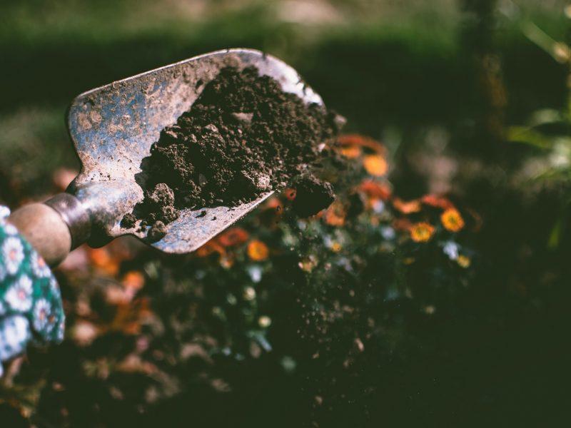 Wanneer is het geschikte moment voor tuinonderhoud