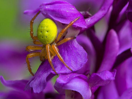 Hoe weer je spinnen uit je tuin
